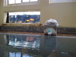 金魚と浴槽6.jpg