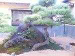 松_150212.jpg