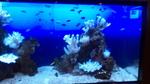 ラクーアフロントの熱帯魚3.jpg