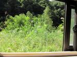 窓からの眺め.jpg